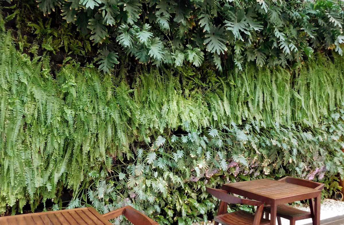A lush green wall with lots of different plants