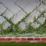 LIV Apartments wall crawler plants