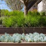 Westin hotel grasses and succulents